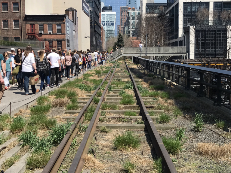 High Line tracks with new plants