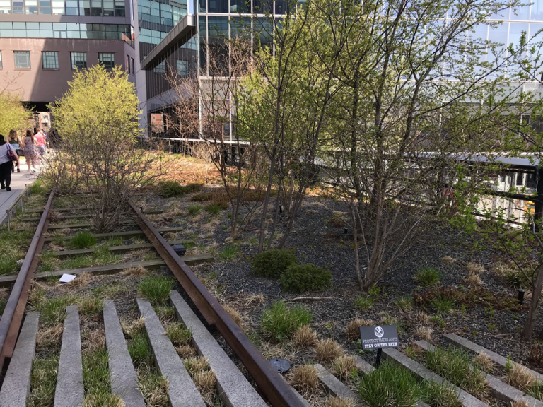 Garden and tracks on the High Line